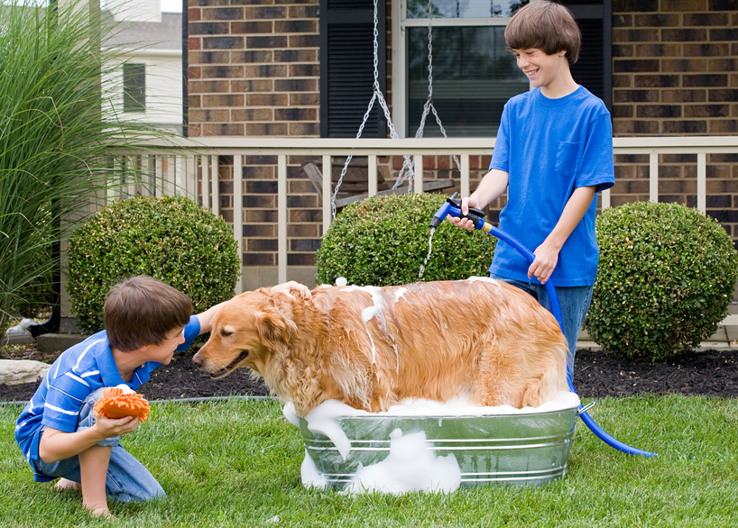 How To Give Dog Bath At Home