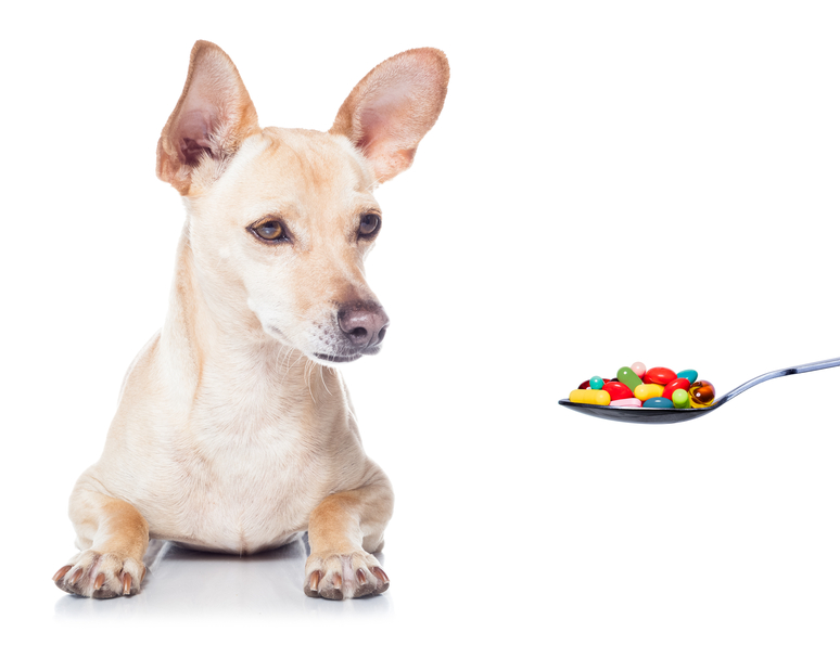 Over the counter medications that are safe for dogs hot Can a dog tell if another dog is sick