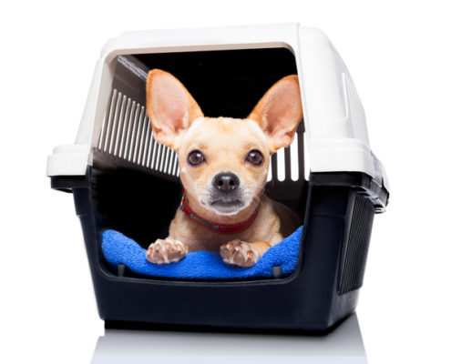 Crate Training-Puppies