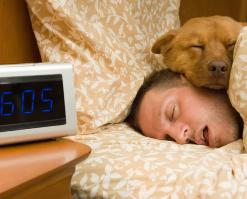 Should Your Dog Sleep in Bed With You?