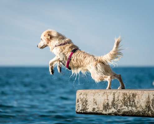 What is Dock Diving?
