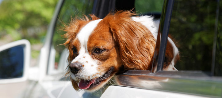 Summer Heat Pet Safety