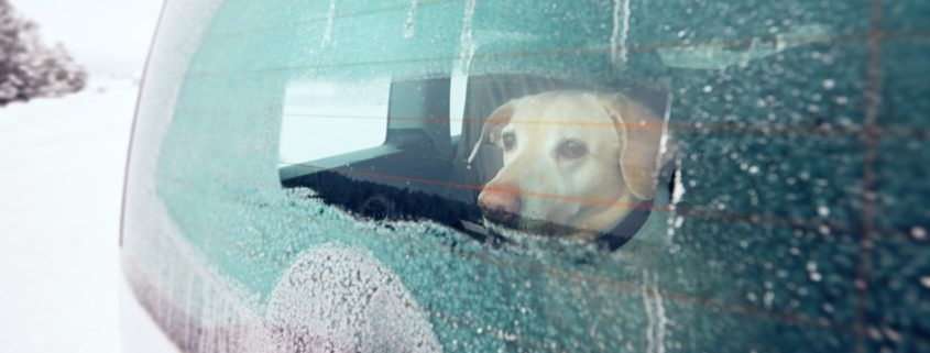 Help For Your Dogs Car Sickness