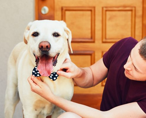 Resource Guarding - Teaching Your Dog How To Share