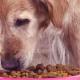 Is My Dog Allergic to Chicken?