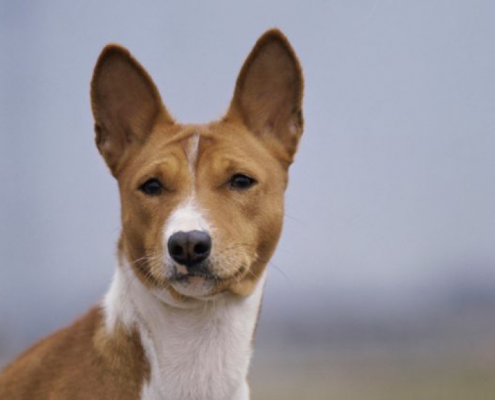 Why Some Dogs Don't Bark
