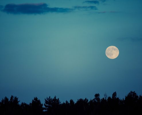 How Does the Moon Affect Your Pet: Lunar Phases and Animals