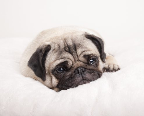 Dogs in mourning: Helping our pets cope with loss