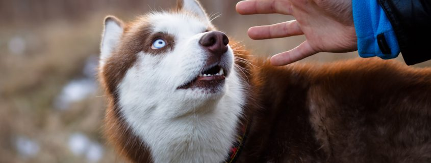 Science Discovers That Dogs Can Sense 'Bad People'