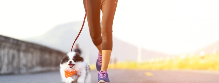 Jogging Can Be Harmful To Puppies
