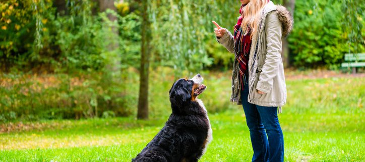 Teach Your Dog to Look on Command
