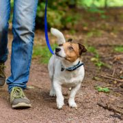 A Guide to Leash Pressure