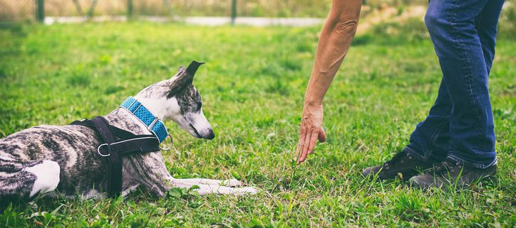 The Evolution of Modern-Day Dog Training & Obedience. Part 1 Today's trainers owe much to their predecessors