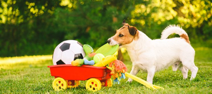 What's So Special About Your Dog's Favorite Toy