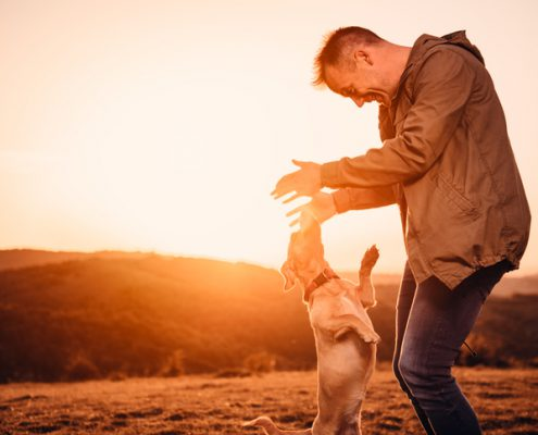 What Is the Best Way to Greet Your Dog