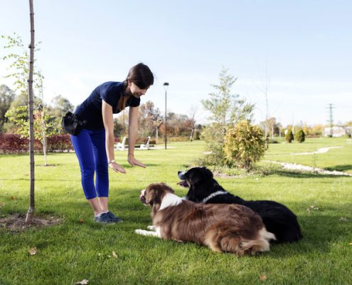 The Problem with All-Positive Dog Training