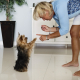 Training Your Dog to Take Treats Gently