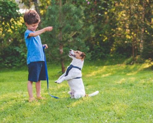 Benefits of Obedience Training