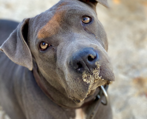 Ditch the Dirt – Tips on How to Stop Your Dog from Eating Dirt!