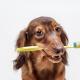 Doggie Dental Hygiene