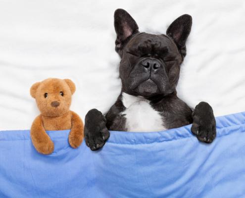 Doggie Dreams