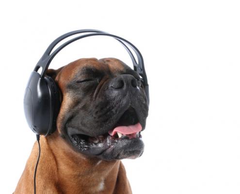 Dogs & Music