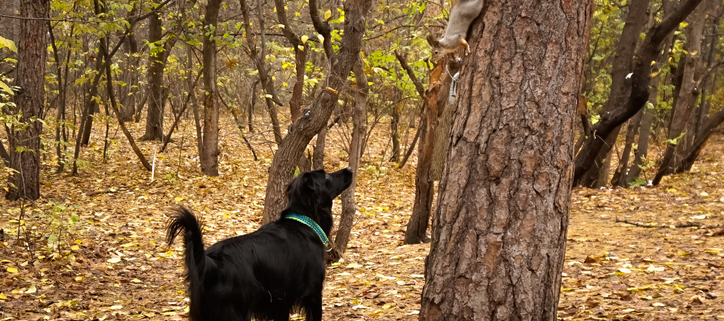 Dogs & Squirrels!