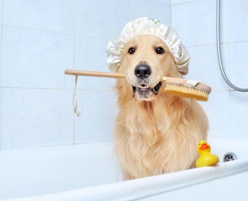 Scrub a Dub Dub Tips for Bathing Your Dog