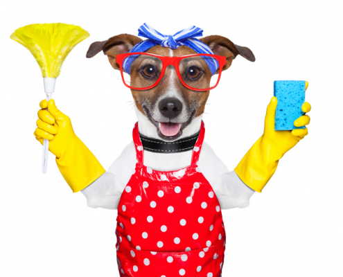 Seven (7) Tips on How to Keep your House Clean with a Dog!
