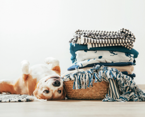 Tips on How to Wash Pet Bedding