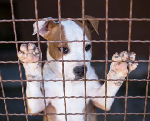 Why Should You Adopt a Shelter Dog