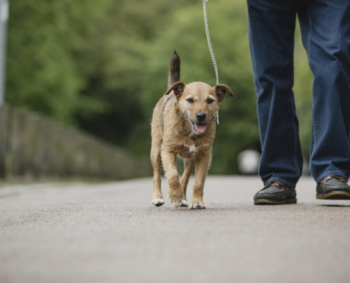 Tips for Exercising Senior Dogs