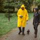 Rain, Rain Go Away! How Rain Affects Your Dog