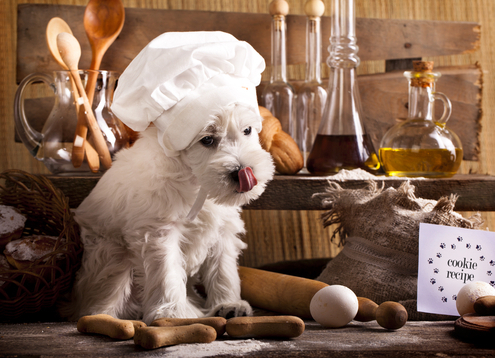 Tuesday's Treat: Chicken & Biscuit Treats