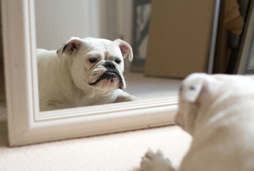 Mirror Mirror on the Wall Who is the Best Dog of them All