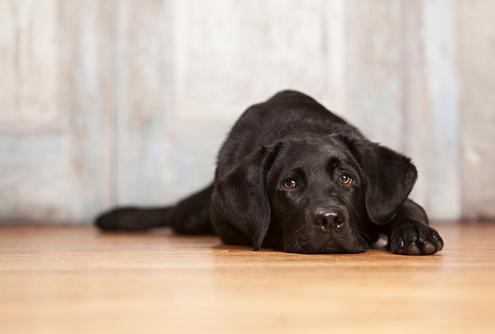 Is Your Dog SAD