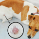 Ringworms in Dogs