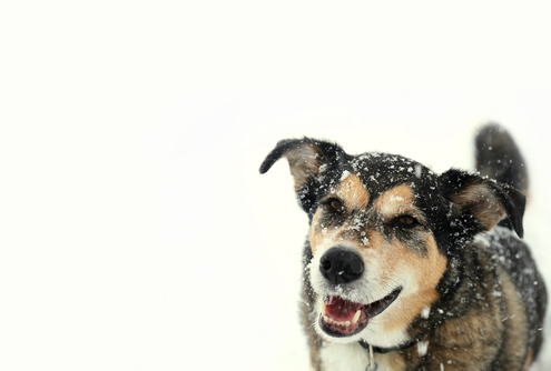 Winter Safety Tips for Dog Owners