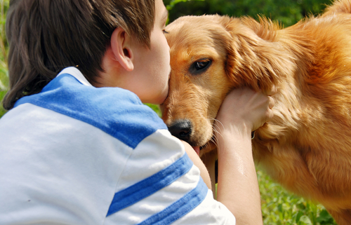 Family Dogs The Best Breeds!