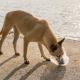 Plastic Bags & Dogs: The True Dangers
