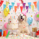 Tuesday's Treat Doggie Birthday Cake!