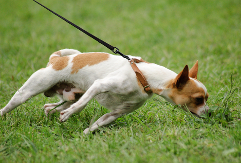 Games to Teach Impulse Control to Dogs