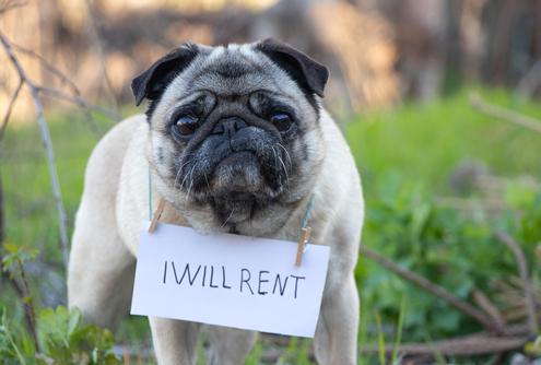 Pet-Friendly Rental Property Policies