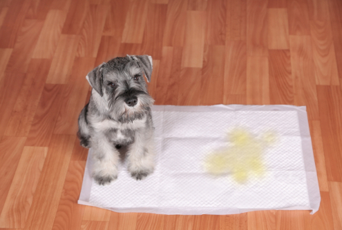 Tips on How to Potty Train Your Pup in the Winter