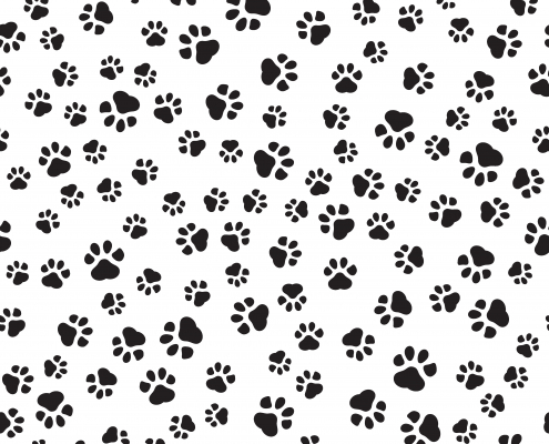 Dog Paws What You Should Know!