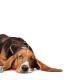 Dog Depression – The Warning Signs