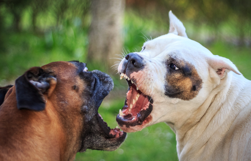 Dog Fights – How to Stop Them!