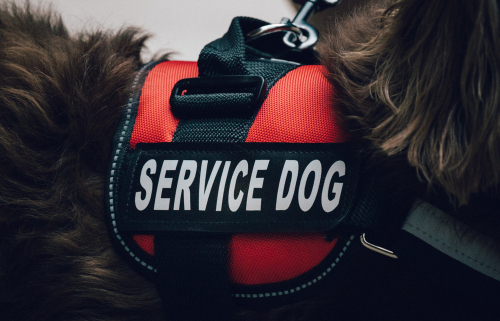 How Can Service Dogs Help