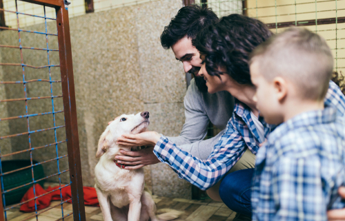 Money Saving Tips for Dog Owners!