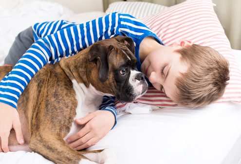 Fighting Anxiety with These Popular Dog Breeds